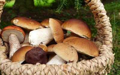 September: time for Porcini and Gran Selezione